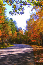 Fall image of Wilcox Park