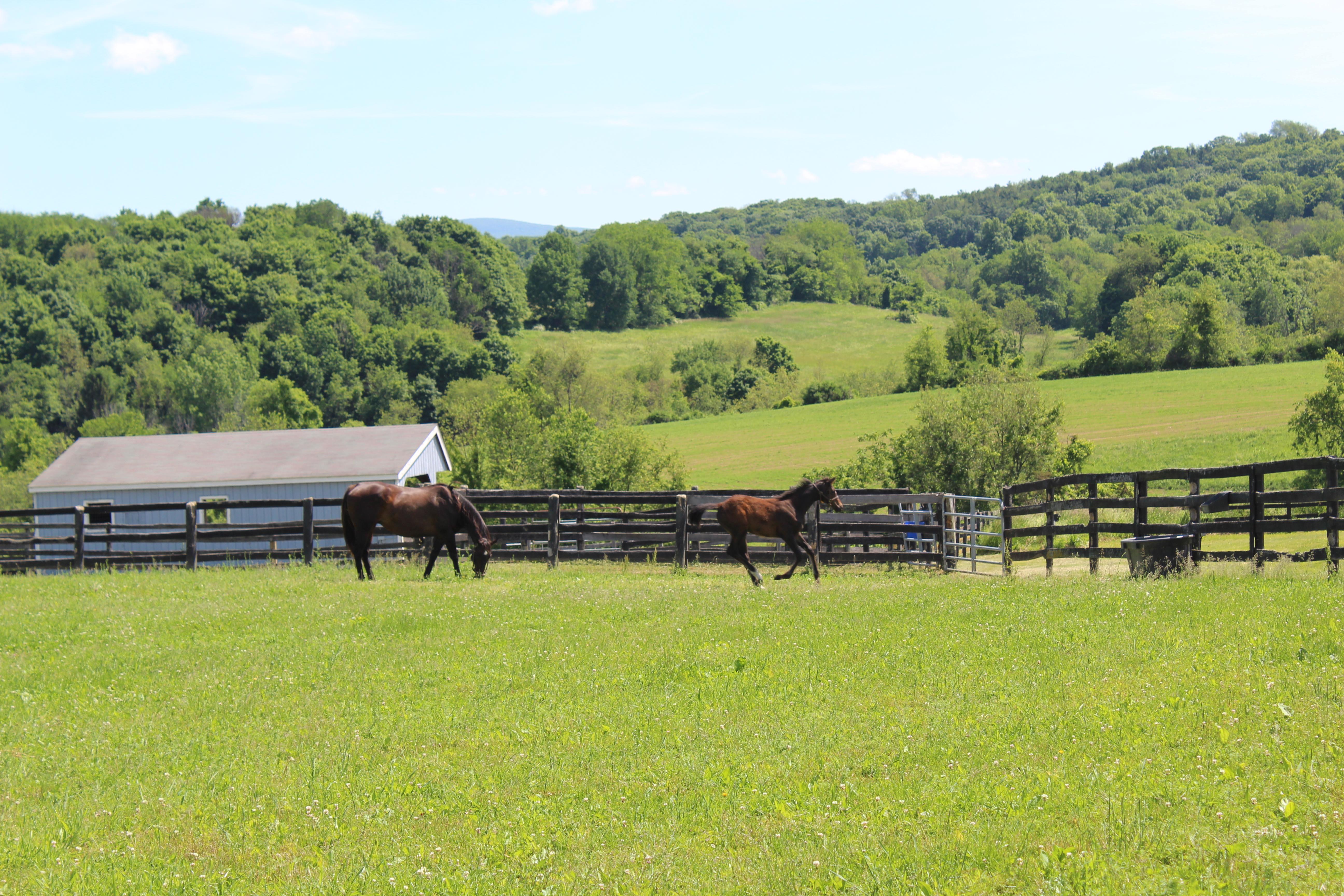 Dutchess Views Farm in the Town of Pine Plains